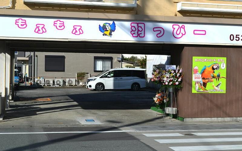 """浜松に鳥カフェ登場!皆さんハッピー""""羽っぴー""""になりますよ!"""