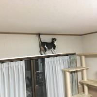 【ペットリフォーム事例】猫ちゃんも快適に♪キャットウォーク他